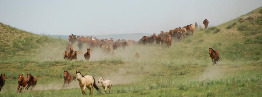 chevaux de gengis khan