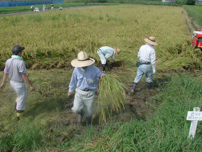 dynamique-representations-sociales-agriculture-ruralite-no-life-toyota-japon1